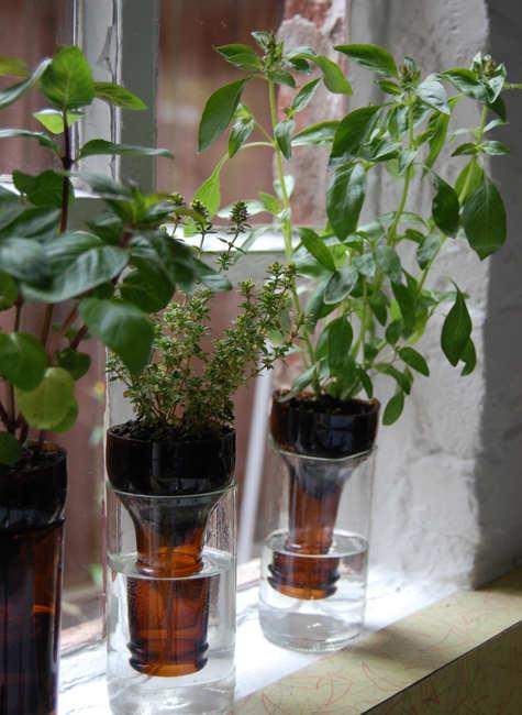 všimnite si bylinkovú záhradu v byte