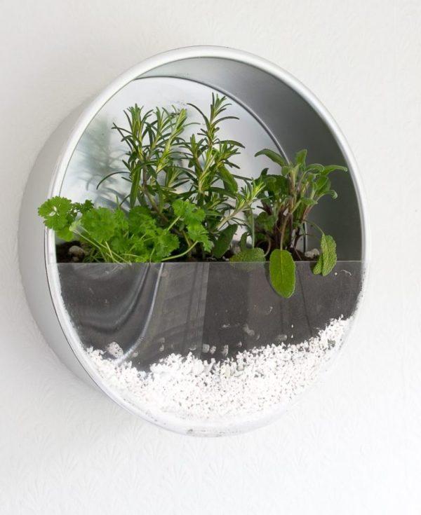 bylinková záhrada v byte