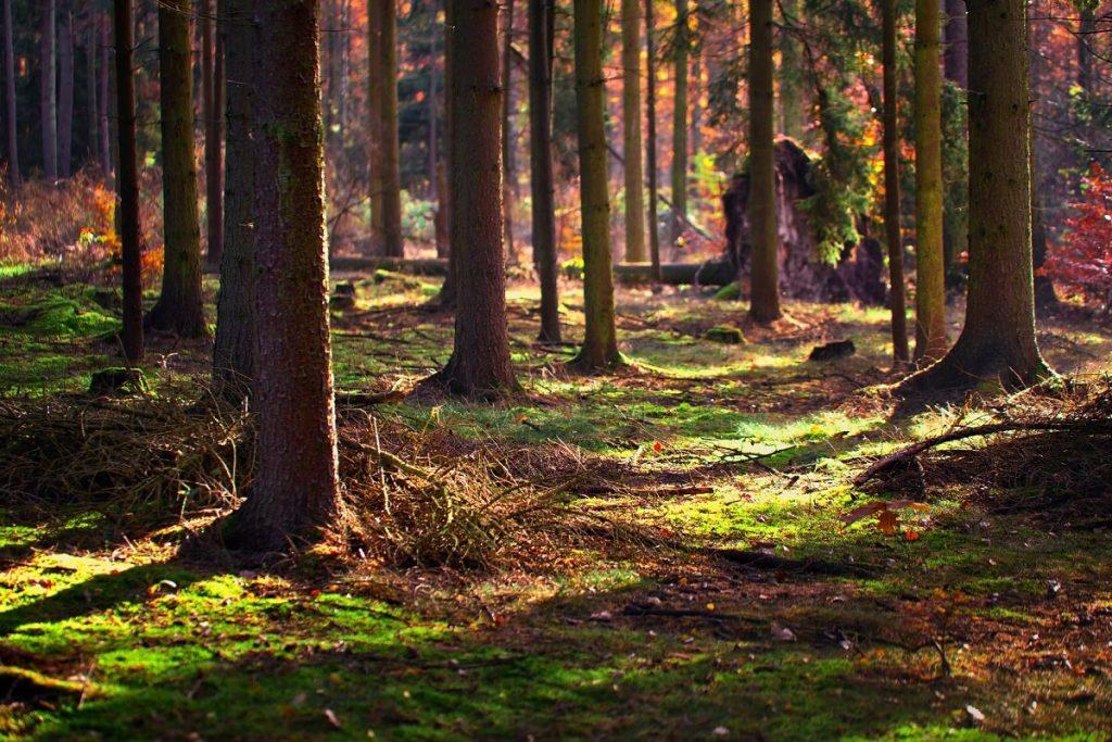 stromy, strom, les
