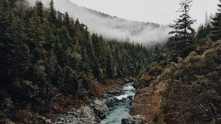 Stromy a ich využitie: Poznáte všetky lesné pásma