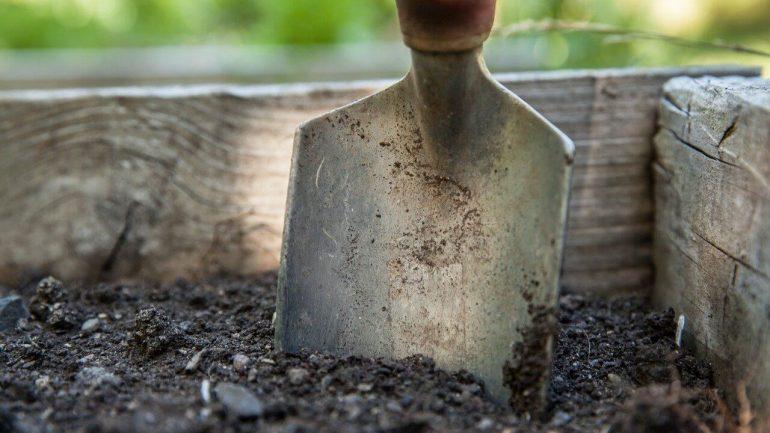Ako založiť vlastnú zeleninovú záhradu