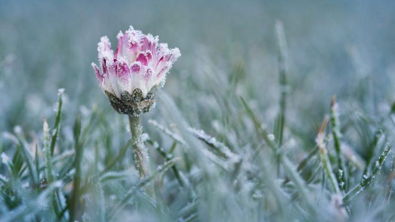 rastliny pred mrazom