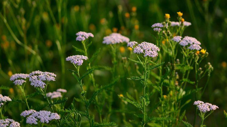 3 bylinky, ktoré vám pomôžu vyzdravieť