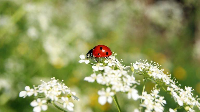 Užitočný hmyz vo vašej záhrade