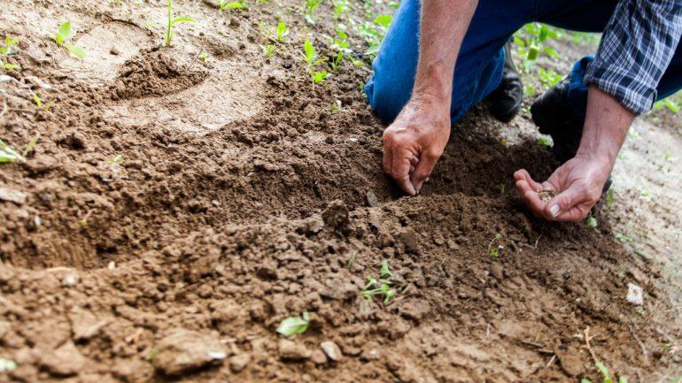 aké druhy pôdy poznáme