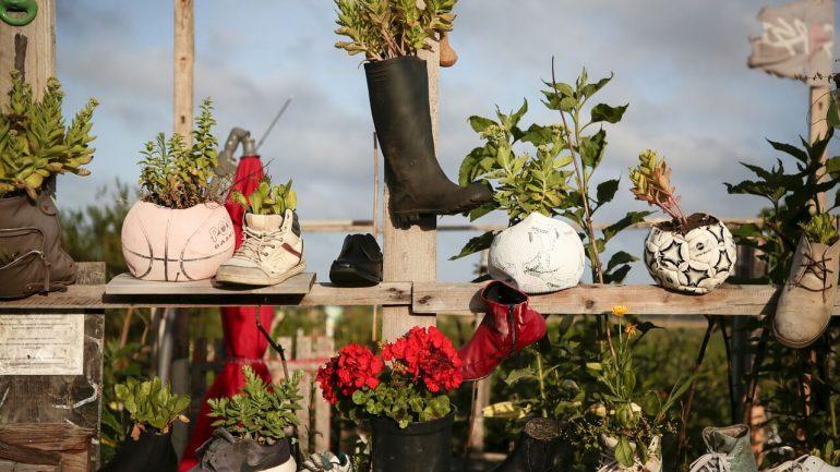 pestovanie rastlín v topánkach