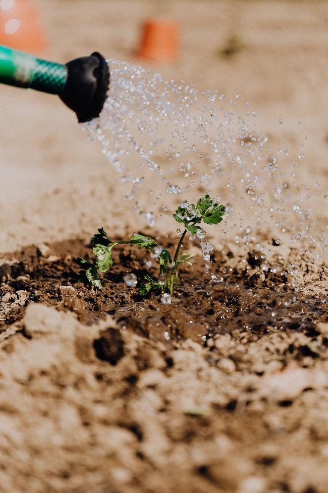 polievanie, aké druhy pôdy poznáme
