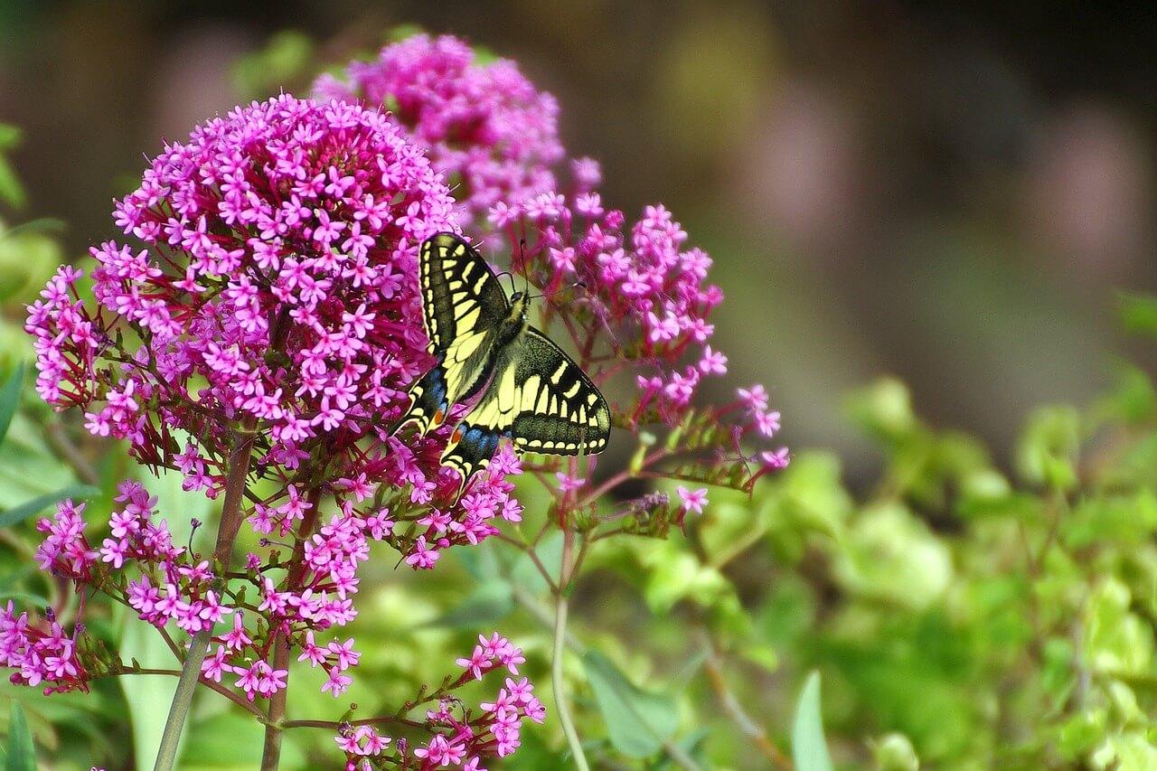 dovolenka doma na záhrade a kvety