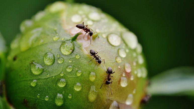 5 prírodných riešení ako sa zbaviť mravcov