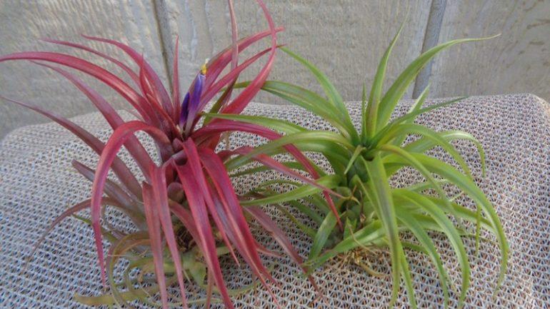 rastliny bez pôdy