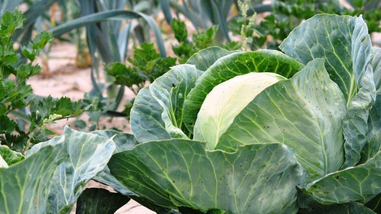 Jesenná záhrada: Spoznajte tipy na jej založenie, časť II.