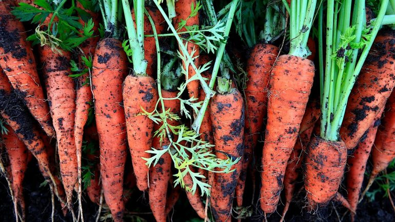 ako a kedy zbiera zeleninu