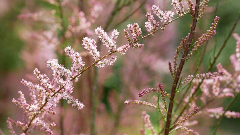 rastliny z dovolenkových destinácií