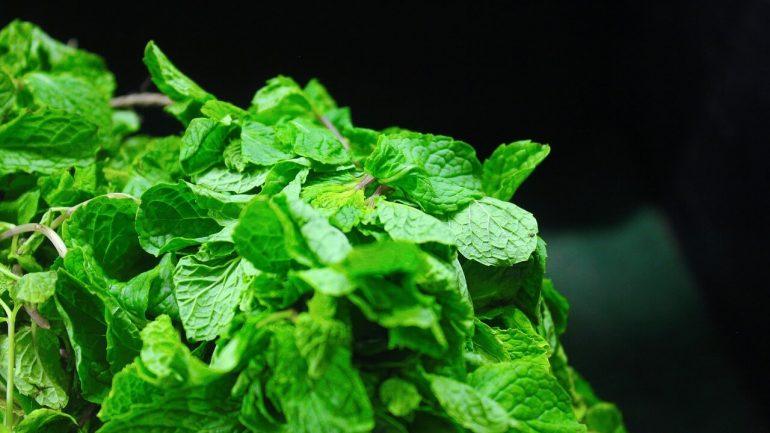 Hnojivo z mäty: Ako ho používať vo vašej záhrade