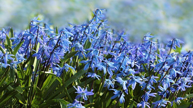 Výsadba jarných kvetov