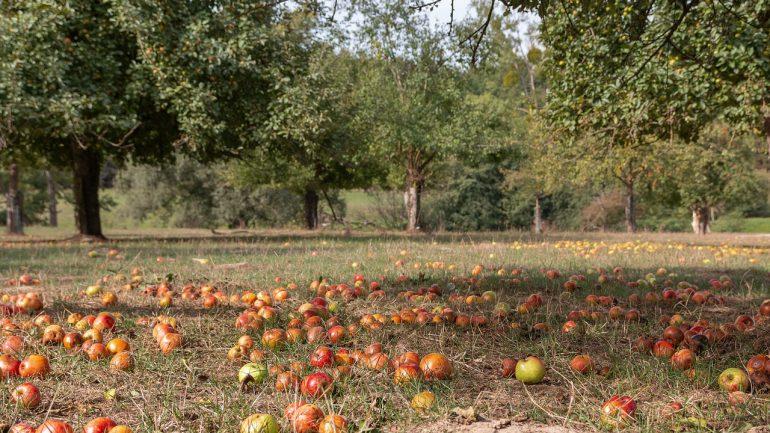 Divoké jablone a hrušky: Spoznajte ich skrytý význam