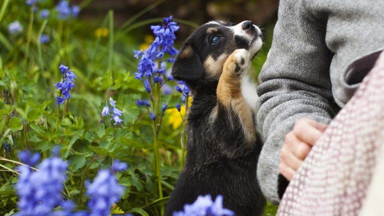 3 tipy, ako odlákať psa zo záhrady