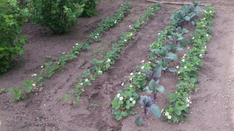 Najbežnejšie chyby, ktoré robia záhradkári, časť II.
