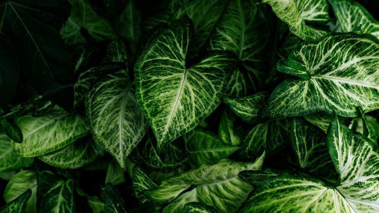 6 najdrahších izbových rastlín, časť II.