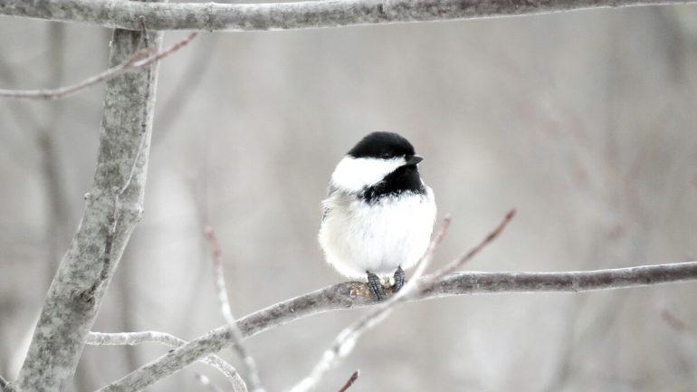 Ako prilákať vtáky v zime na vašu záhradu