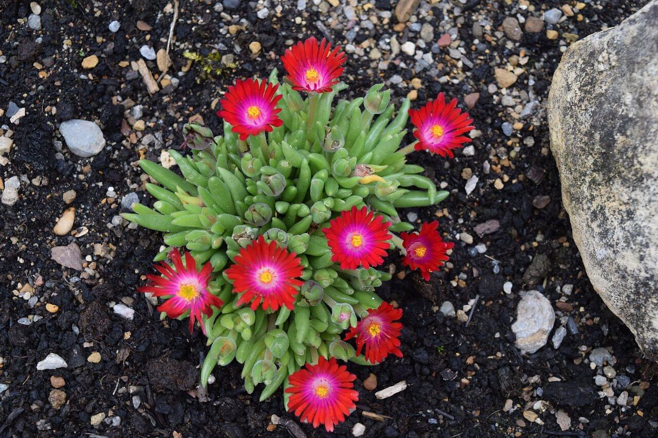 14 odrôd, ktoré sa dajú pestovať zo semien