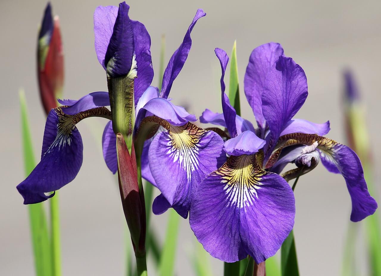 reč kvetov, spoznajte ich symboliku