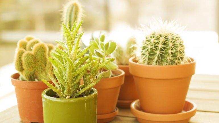 Presádzanie rastlín: Základné informácie pre začiatočníkov