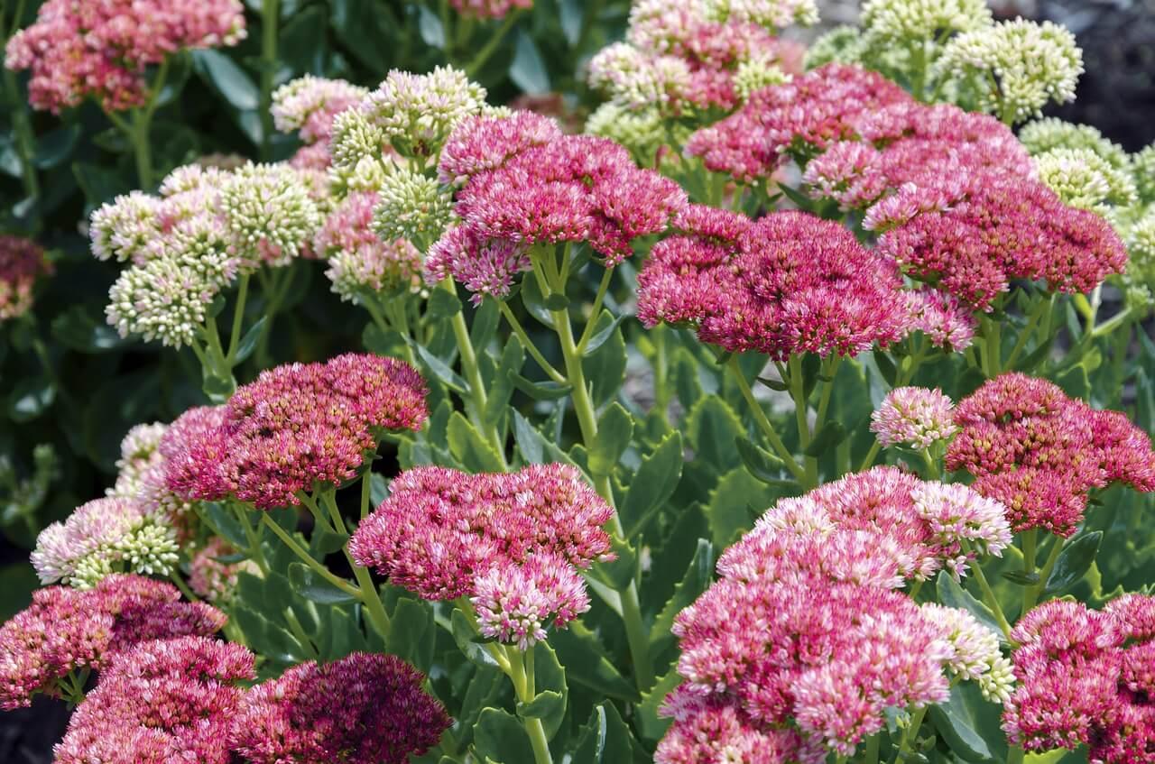 Kvety, ktoré milujú sucho.