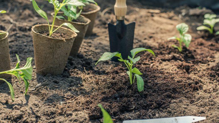Zelenina vhodná na výsadbu v máji