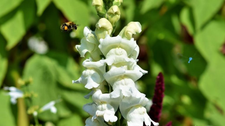 Tieto kvety včely milujú, máte ich v záhrade?