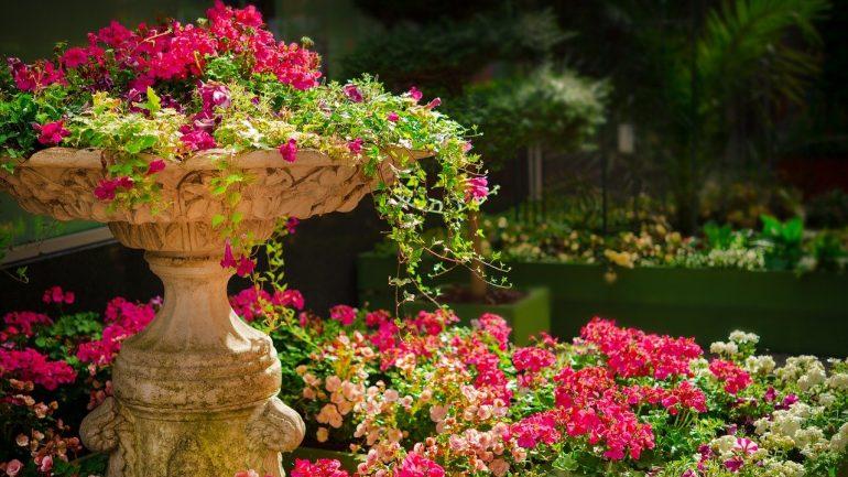 Kvety do vašej záhrady, ktoré dlhodobo kvitnú