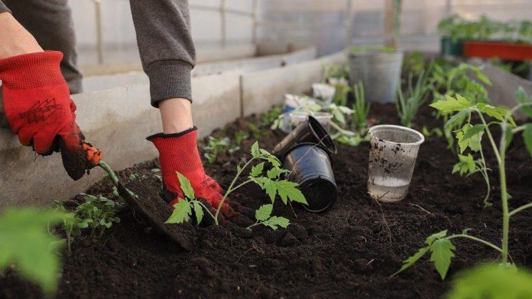 6 typov pôdy, a ktorým rastlinám sa na nej bude dariť