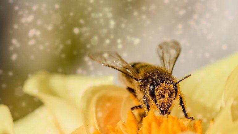 Bodla vás včela? Tieto domáce lieky vám pomôžu