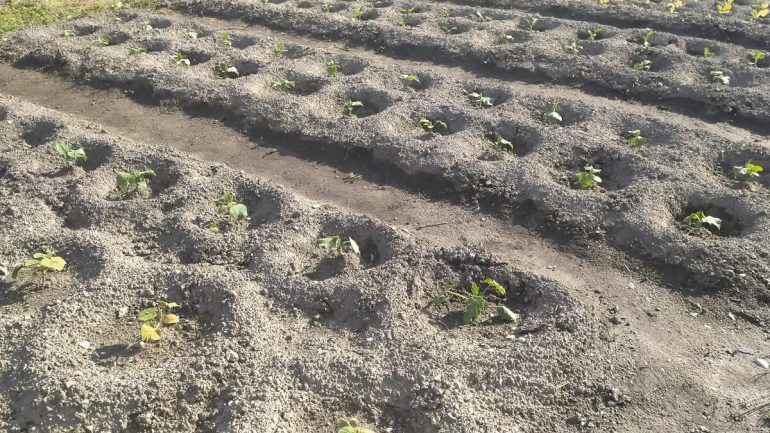 6 druhov pôdy a rastliny, ktoré na nej pestovať, č. II