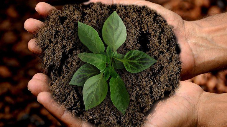 Ako zmeniť a skvalitniť vašu pôdu pre lepšiu úrodu