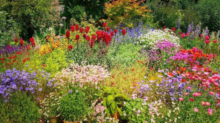Ako urobiť záhradu farebnejšou? Tu je 5 spôsobov
