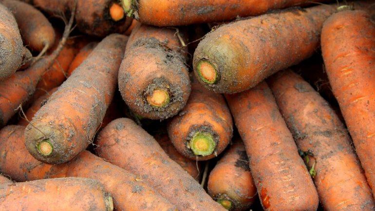 Choroby mrkvy, na ktoré treba byť pripravený