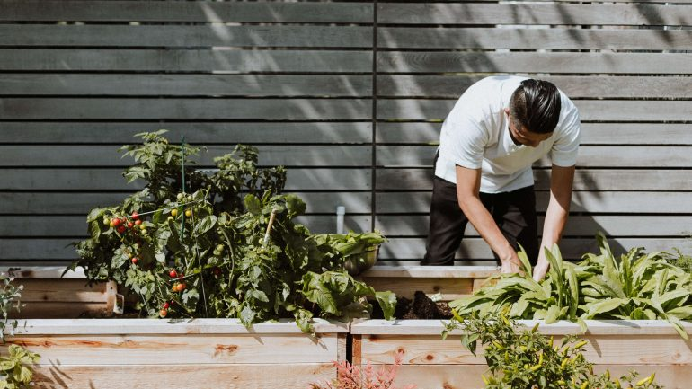 Čo je square food gardening a zásady tohto pestovania