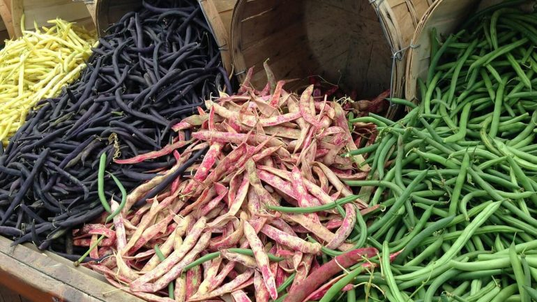 Čo ste o fazuli nevedeli plus rady pre lepšiu úrodu