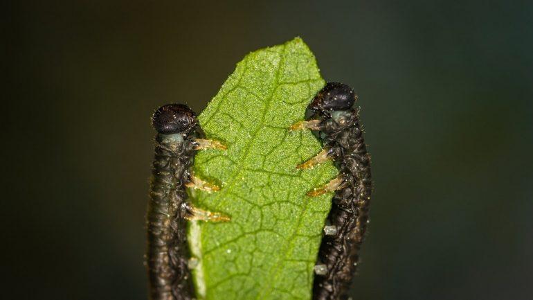 Húsenice v kapuste: Domáce ekotipy a kedy použiť chémiu