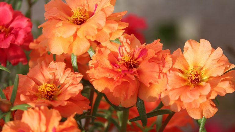 20 nádherných pôdopokryvných rastlín do vašej záhrady