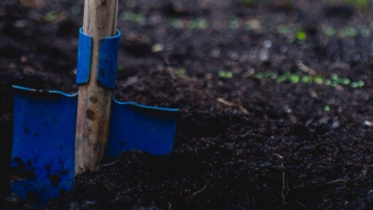 Ako sa pripraviť na výsadbu ovocných stromov a kríkov