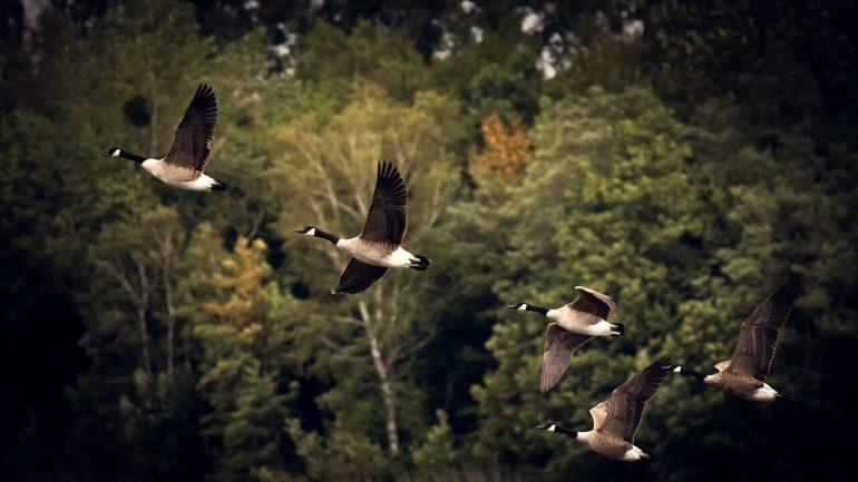 Kedy nastáva migrácia vtákov? Toto sú zaujímavé fakty