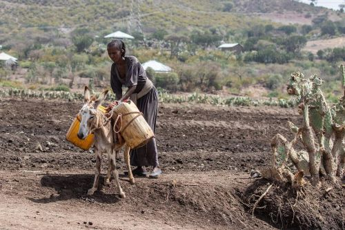 etiópska žena pri práci, zdroj: pixabay.com