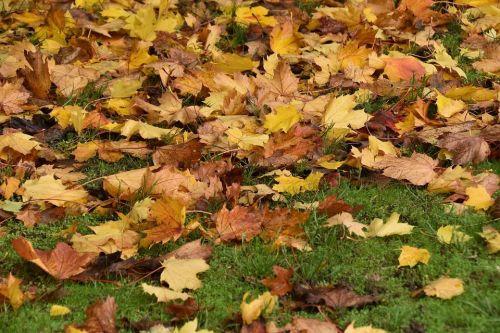 jesenný trávnik